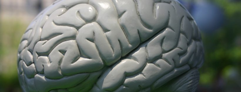 A model of a human brain, seat of the memory
