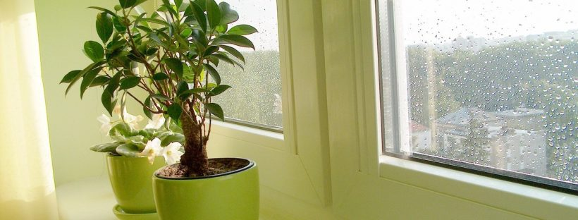 A picture of a window taken from inside. Two houseplants sit in pots on the windowsill. Isolation needn't be limiting. Picture from freeimages.com