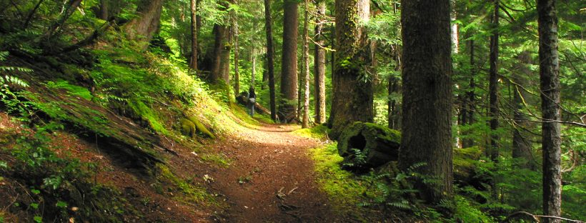 A wooded path - image from freeimages.com.